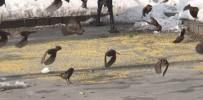KIŞ MEVSİMİ - Ağrılı Esnaftan Aç Kalan Kuşlara Şefkat Eli