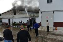 KAPALI ALAN - Fide Üretim Tesisinde Yangın