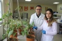 KIŞ MEVSİMİ - 'Çiftçiler Kuraklığa Dayanıklı Tohumlar Seçmeli'