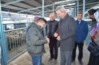 İL TARIM MÜDÜRLÜĞÜ - Denizli'de 44 Genç Çiftçiye Bin 628 Koyun Dağıtıldı
