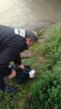 TEMİZLİK ARACI - Karayolunda Ezilmek Üzere Olan Martıyı Belediye İşçisi Kurtardı
