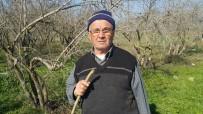 BALCıLAR - Almanya'da Emekli Oldu, Memleketinde Çiftçiliğe Devam Ediyor