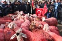 SEYFULLAH - Yozgatlı Çobanlar Kınaladıkları Kurbanları Mehmetçiğe Gönderdi