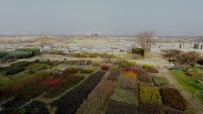 ERGUVAN - Yunusemre'de Bahar Hazırlıkları Sürüyor