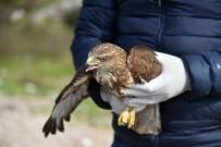 CIKCILLI - Alanya'da Tedavisi Tamamlanan 2 Şahin Doğaya Salındı