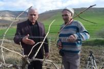 BAĞLAMA - Alaşehir Üzüm Bağlarında Kışlık Bakım Çalışmaları Sürüyor