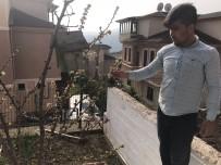 ERİK AĞACI - Erik ağacı Şubat ayında çiçek açtı