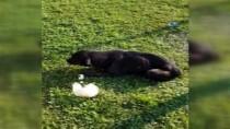 YÜKSEK ATEŞ - İstanbul'da Göbeğinde Vahşeti, Köpeğin Makatına Silikon Sıktılar