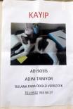 PARA ÖDÜLÜ - Kaybolan Kedi İçin 'Kayıp' İlanı