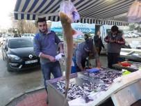 BALIK FİYATLARI - Marmara'da Köpek Balığı Yakalandı