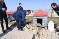 SOKAK HAYVANI - Muş'ta Sokak Hayvanları Sahipsiz Değil