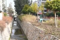KONYAALTI BELEDİYESİ - Konyaaltı'nda Ağaçlara Bakım