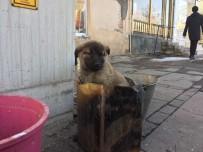 YAVRU KÖPEK - Soba Közünde Isınan Yavru Köpeğe Şefkat Eli