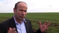 GÜNEYDOĞU ANADOLU BÖLGESİ - Ocak Yağmuru Güneydoğu Çiftçisi İçin 'Can Suyu' Oldu