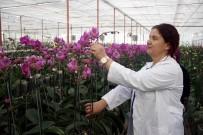 ORTA ÇAĞ - Sevgililerin Orkidesi Antalya'dan