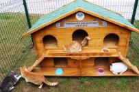 HAYVAN HAKLARı FEDERASYONU - Belediyeden Sokak Hayvanlarına Lüks Dubleks Yuva