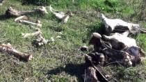 YENIYURT - Devriyeden Dönen Jandarma Hayvan Kemikleri Buldu