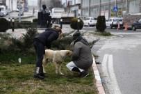 HAYVAN BARINAĞI - Sokaktaki Hayvanlara Mama Desteği