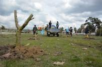 ÜÇPıNAR - Yunusemre'de Ağaçlandırma Çalışmaları Sürüyor