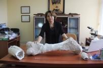 JEOLOJI - Geçmişte Tropikal İklime Sahip Olan Sivas'ta 10 Milyon Yıllık Fosil