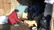YAVRU KÖPEK - Sokak Hayvanlarının Gönüllü 'Doktor Bakıcıları'