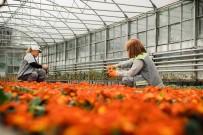EKINEZYA - Tepebaşı'nın Çiçekleri Kenti Süslüyor