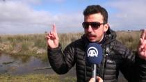 19 MAYıS - Gri Başlı Kız Kuşu Avrupa'da İlk Defa Kızılırmak Deltası'nda Görüldü