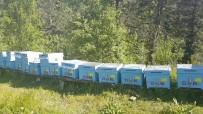 ÇAYAĞZı - Orman Köylüsüne Hibe Destekler Anlatıldı
