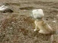 YAVRU KÖPEK - Kafası Bidona Sıkışan Yavru Köpek Kurtarıldı