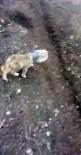 YAVRU KÖPEK - Kafası Bidona Sıkışan Yavru Köpek Son Anda Kurtarıldı
