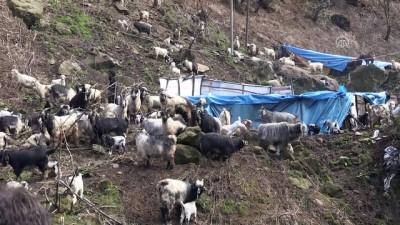 'Keçilere Fısıldayan' Adama Sosyal Medyada İlgi