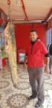 SUDAN - Oltayla 45 Kiloluk Yayın Balığı Yakaladı