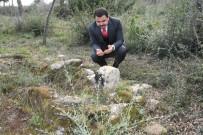 MILLI SAVUNMA BAKANLıĞı - Şehit Üsteğmenin Mezarı 103 Yıl Sonra Bulundu