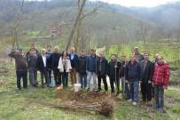Gümüşova'da Kestane Dikimi Gerçekleştirildi