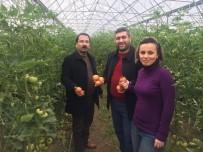 ORGANIK TARıM - İslahiye MYO'da Organik Tarım Öğrencileri Organik Domates Yetiştirdi