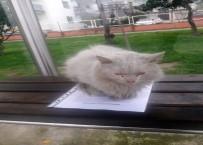 YAĞMURLU - İstenmeyen Kedi İçin Yazı Astı, Paylaşım Rekoru Kırdı