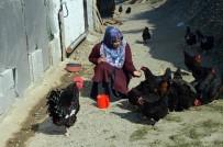 ORGANİK YUMURTA - Kadın Girişimci Kümesini Büyütmek İçin Destek Bekliyor