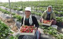 MEVSİMLİK İŞÇİ - Mevsimlik Tarım İşçilerinin Günlük Ücretleri Yüzde 12 Arttı