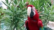 DENIZLISPOR - Papağan 'Sultan' İle Sahibinin Dostluğu