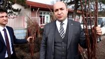 KOCADERE - Yalova'da Kivi Üretilemeyen Alanlarda Trabzon Hurması Yetiştirilecek