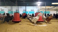 CEMAL ÇOLAK - 40 Milyon Mavi Yumurta Üreteceklerini İddia Eden Mehmet Aydın, Üyelerin Paralarını Alarak Kayıplara Karıştı
