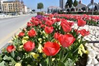 KIŞ MEVSİMİ - Alaşehir Çiçeklerle Renk Cümbüşüne Büründü