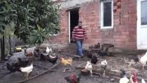 TAVUK ÇİFTLİĞİ - Hobi Olarak Başladığı Tavukçuluk Ek Gelir Kapısı Oldu