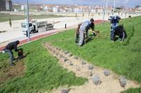 KÖPRÜLÜ - Karaman Belediyesinden Peyzaj Çalışması