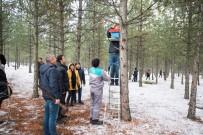 BAHÇEŞEHIR - Kütahya Orman Bölge Müdürlüğü'nden Kuşlara Yuva