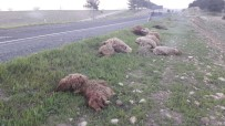 VİRANŞEHİR - Otomobil Koyunları Ezdi