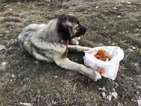 WHATSAPP - Yaralı Köpeğe Çaldıran Belediyesi Ekipleri Sahip Çıktı