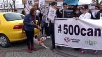 PROTESTO - Edirne'de Sokak Köpeklerinin Kaybolduğu İddiası