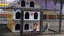 SOSYAL SORUMLULUK - Minik Kalpler 'Sokak Kedileri' İçin Atıyor