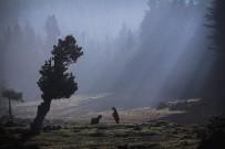 AHMET TURAN - Arka Plan'ın Yarışma Sonuçları Belli Oldu